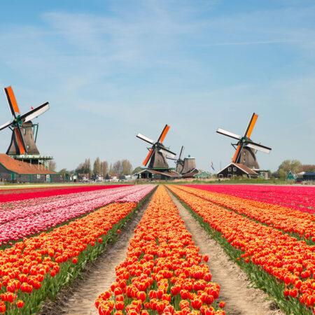 Нідерланди без обмежень!